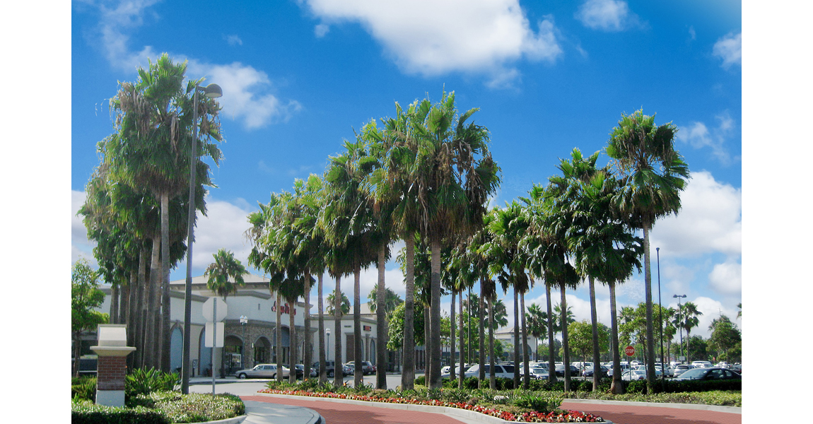 retail complex with many palm trees